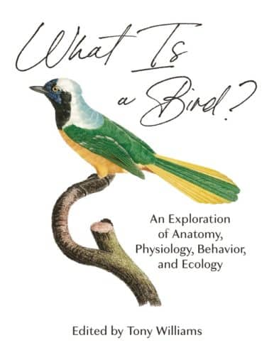 What Is a Bird?: An Exploration of Anatomy