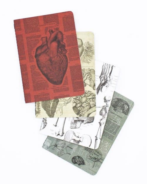 Anatomy Pocket Notebooks Set of 4