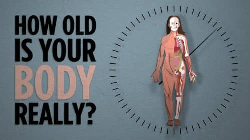 How Old is Your Body Really | Science Video | Abakcus