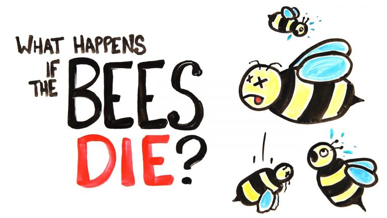 What Happens If All The Bees Die? | Video | Abakcus
