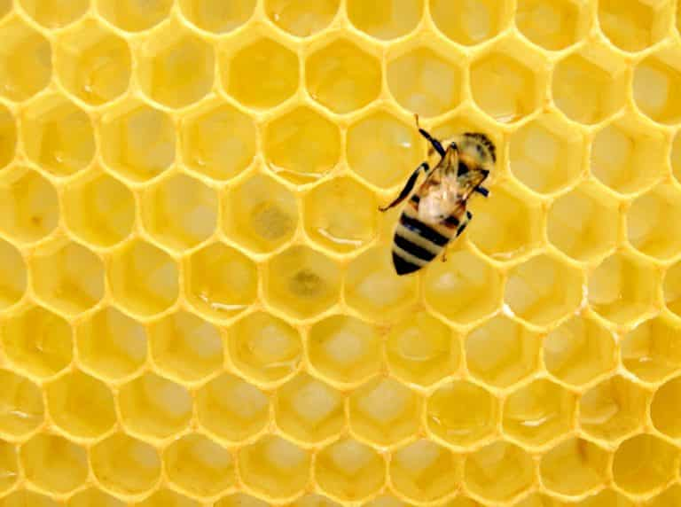 The Astonishing Math Knowledge of Honeybees | Article | Abakcus