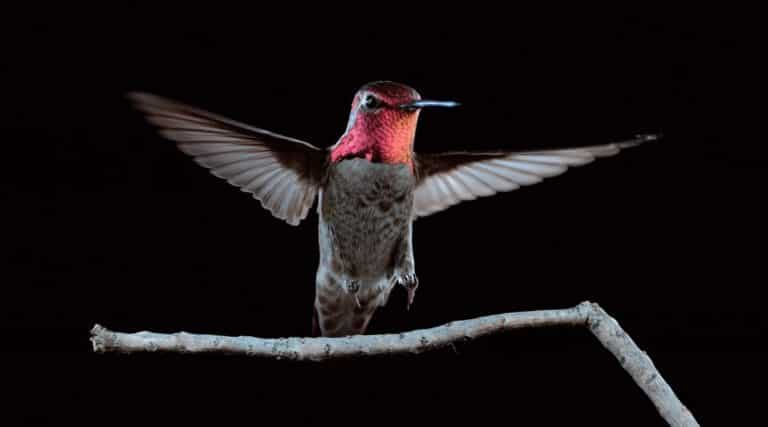 Slow Motion Hummingbirds | Science Video | Abakcus