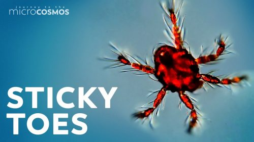 The Fantastic Feet of the Microcosmos | Video | Abakcus