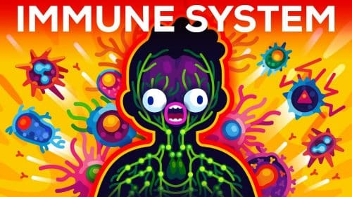 How The Immune System Actually Works? | Video | Abakcus