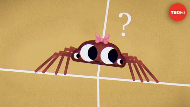 The Giant Spider Riddle | Video | Abakcus