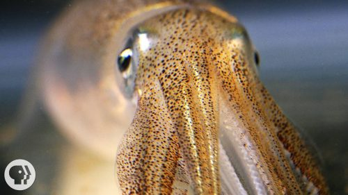 You're Not Hallucinating That's Just Squid Skin | Video | Abakcus