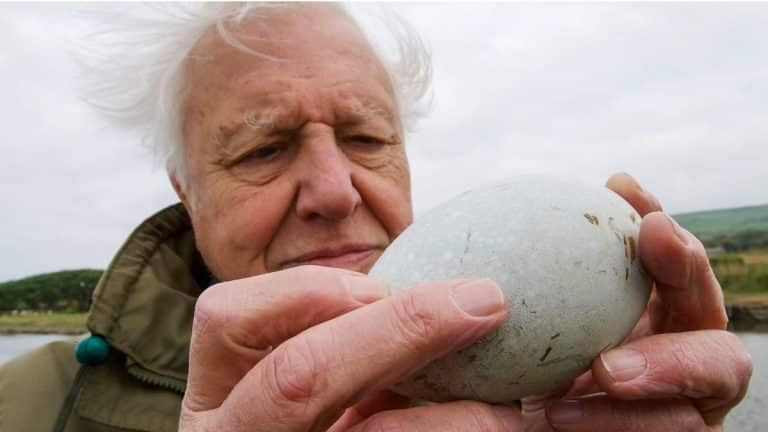 How Are Eggs Made? | Attenborough's Wonder of Eggs | BBC Earth
