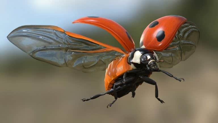 Insects in Flight | Ladybug in Slow Motion | Video | Abakcus